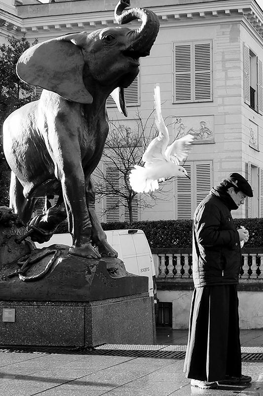 Стрит-фотография Даши Орлянской. Слон, чайка и монах.