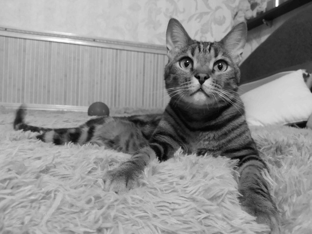 Кіт Андрія та Людмили