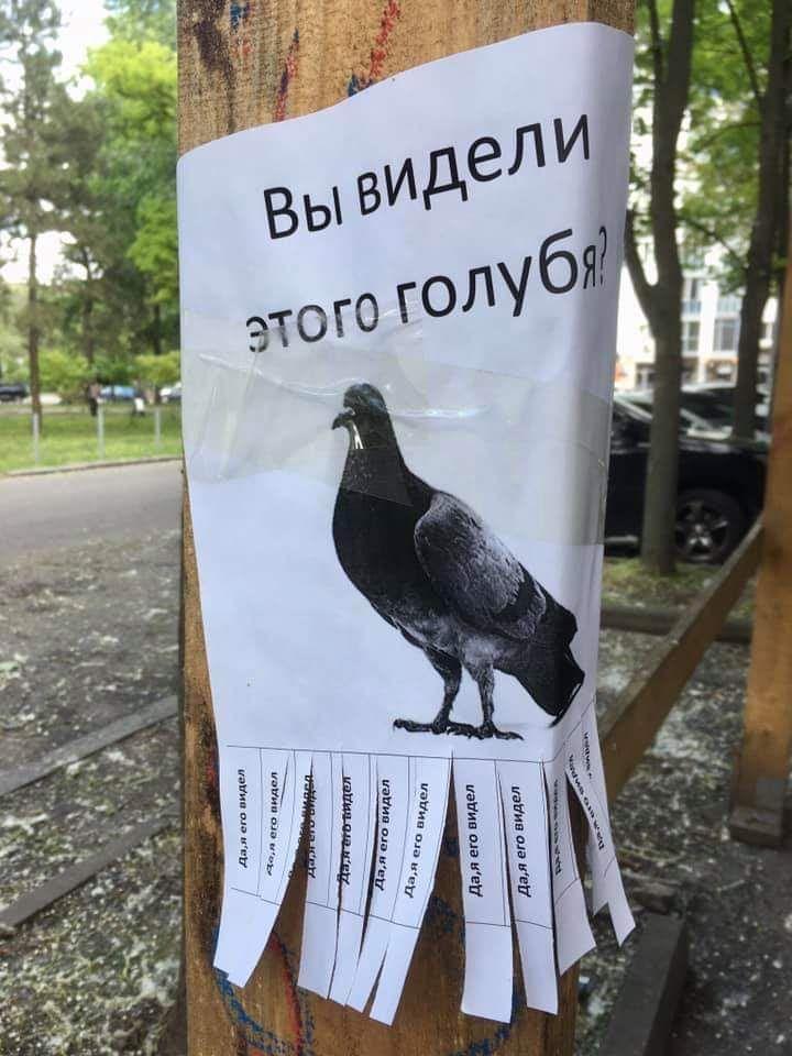 """Объявление с фотографией голубя, вопросом: """"Вы видели этого голубя?"""" и отрывным ответом """"Да, я видел"""""""