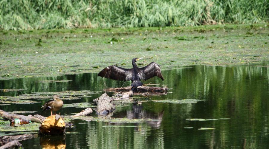 5 мест в Днепре, где лучше всего наблюдать за птицами - 10 зображення
