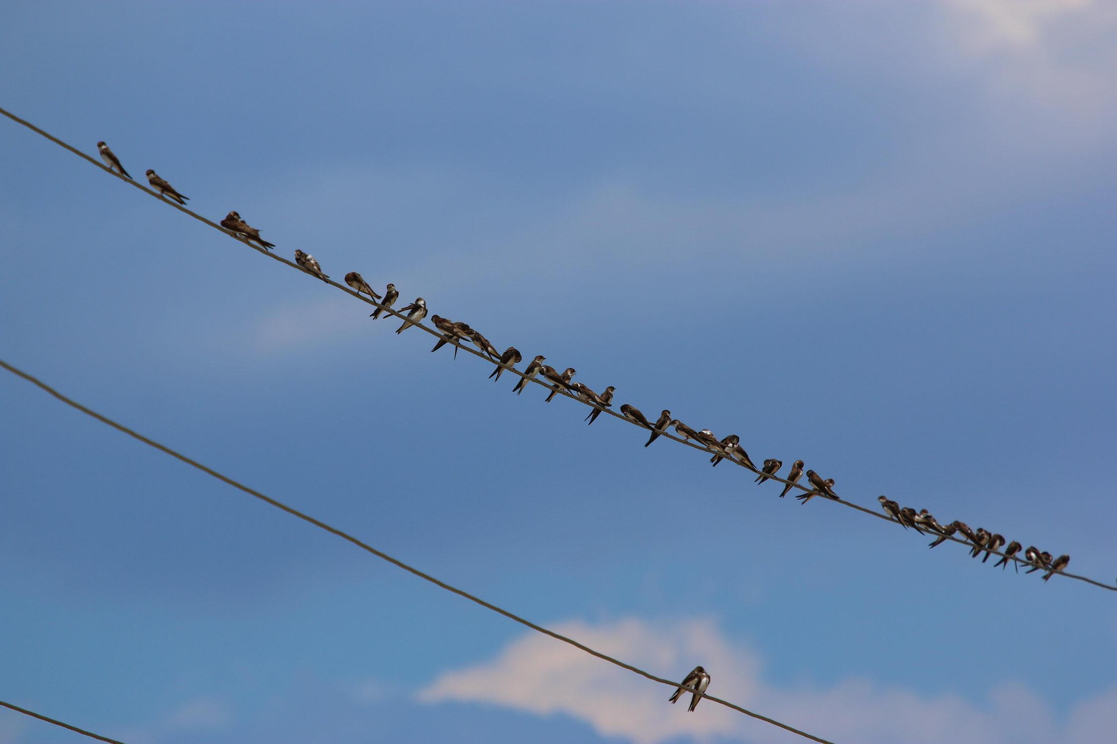 5 мест в Днепре, где лучше всего наблюдать за птицами - 13 зображення