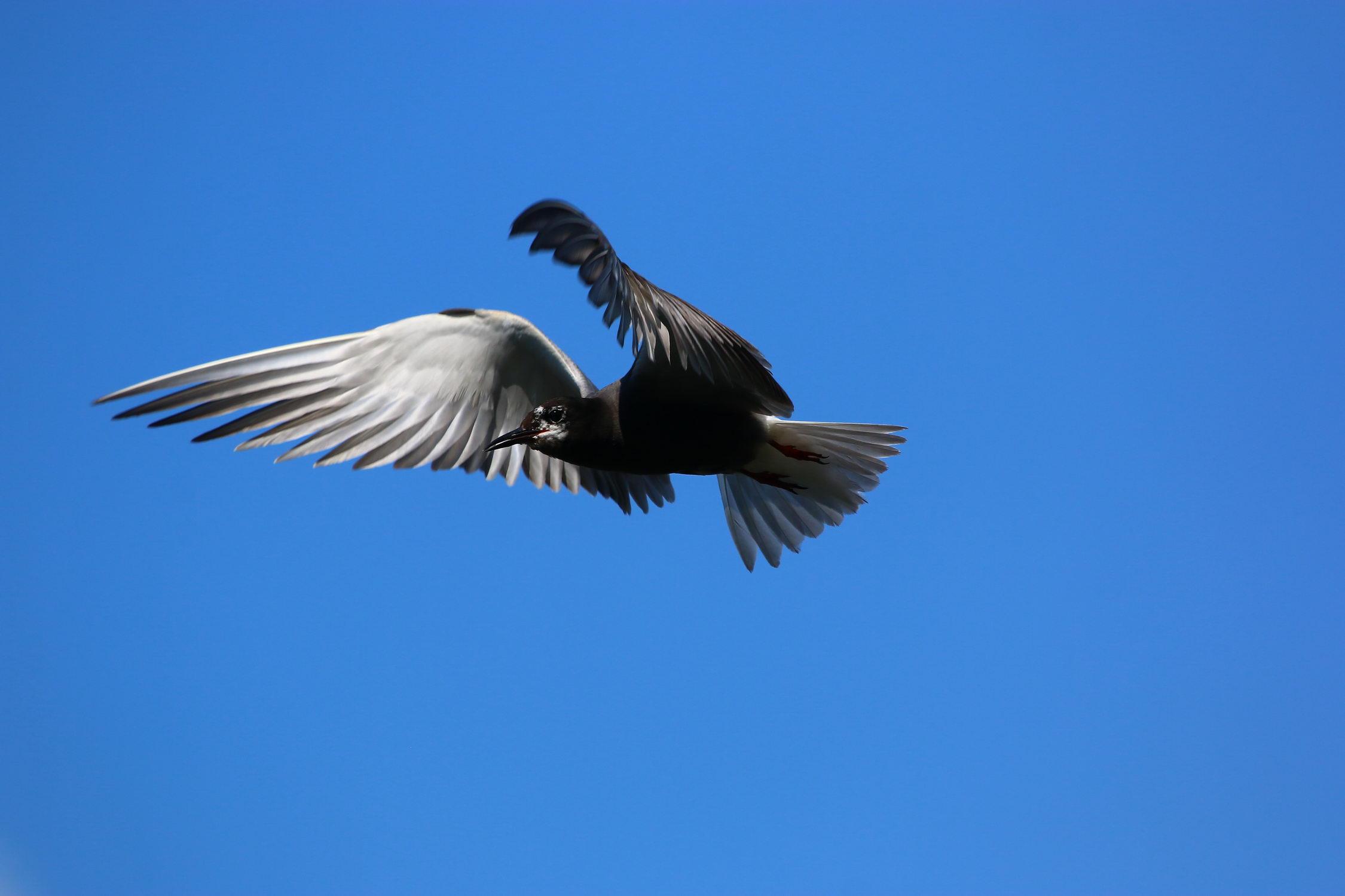 5 мест в Днепре, где лучше всего наблюдать за птицами - 12 зображення