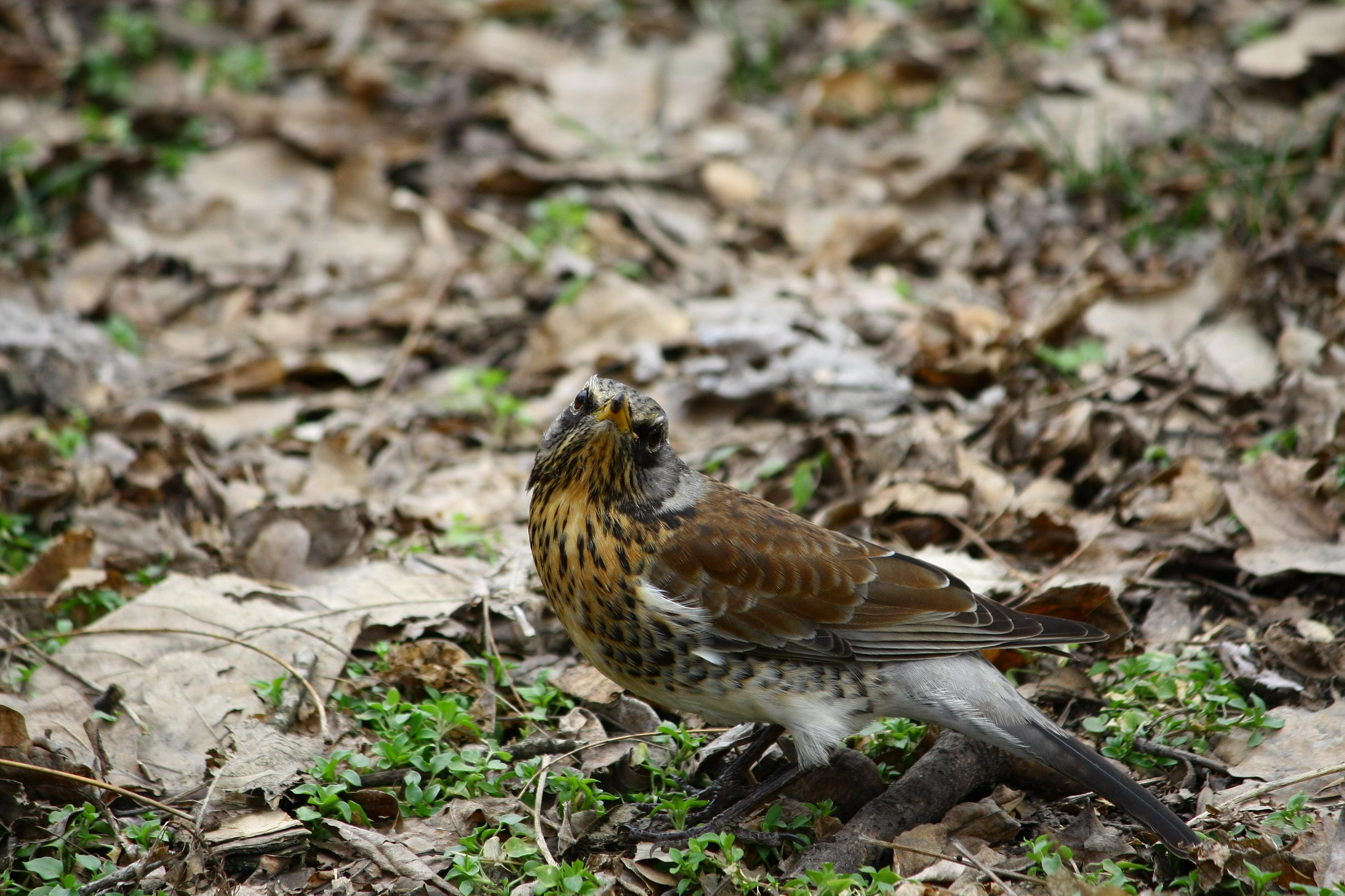 5 мест в Днепре, где лучше всего наблюдать за птицами - 3 зображення