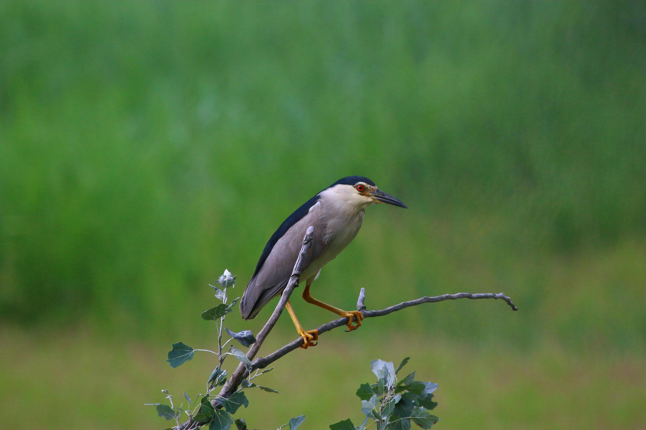 5 мест в Днепре, где лучше всего наблюдать за птицами - 17 зображення