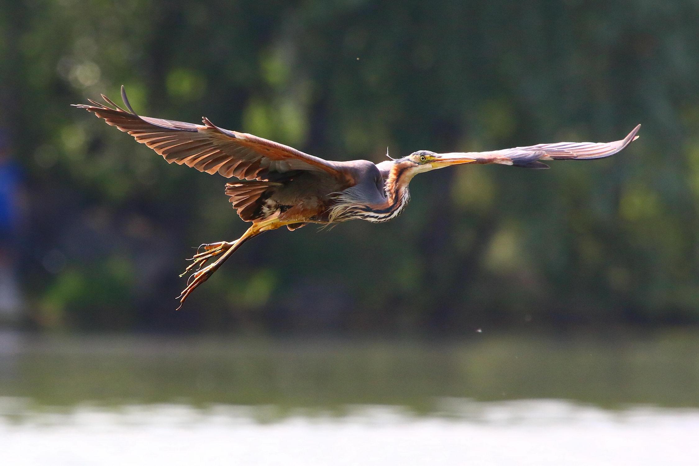 5 мест в Днепре, где лучше всего наблюдать за птицами - 11 зображення