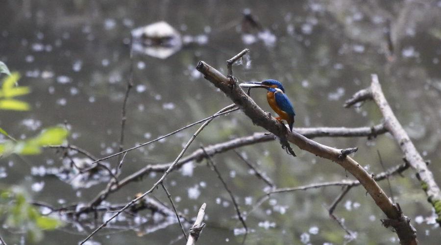 5 мест в Днепре, где лучше всего наблюдать за птицами - 9 зображення