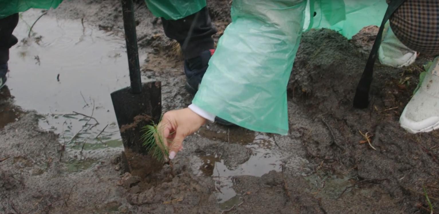 Для висадки дерев шукають волонтерів, амбасадорів та партнерів
