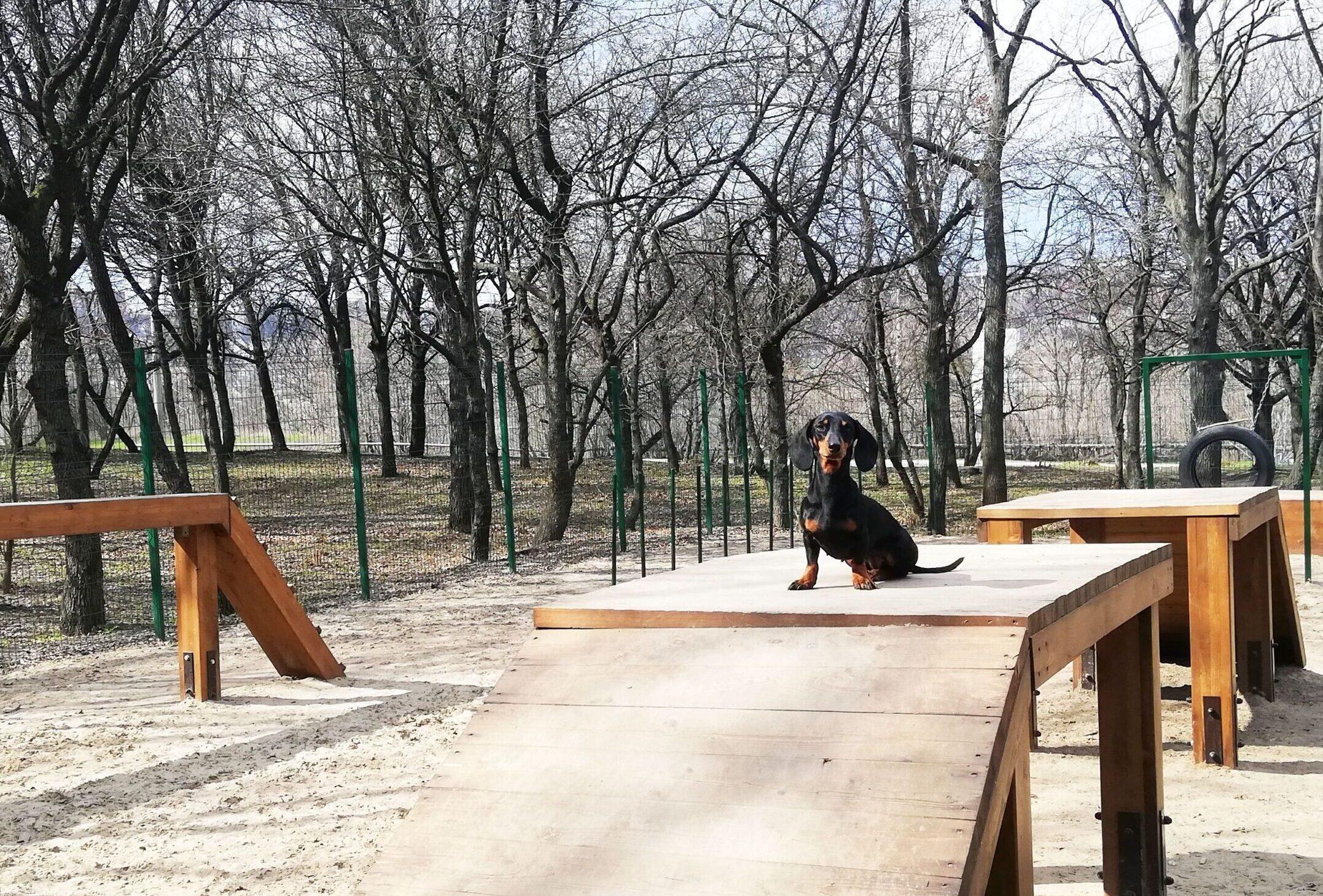 Де гуляти з собакою у Дніпрі: добірка обладнаних майданчиків
