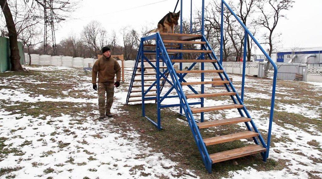 Де гуляти з собакою у Дніпрі: добірка обладнаних майданчиків - 1 зображення