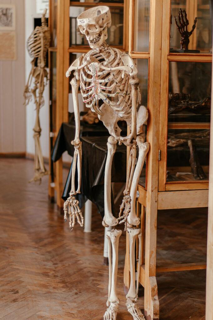 Не для слабонервных: музей медуниверситета - 5 зображення